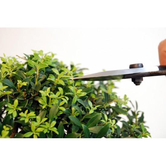 KST201 Ножици за бонсай Okatsune 201 със средно острие и защитен стопер