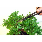 KST206 Bonsai scissors Okatsune 206: light precision pruning